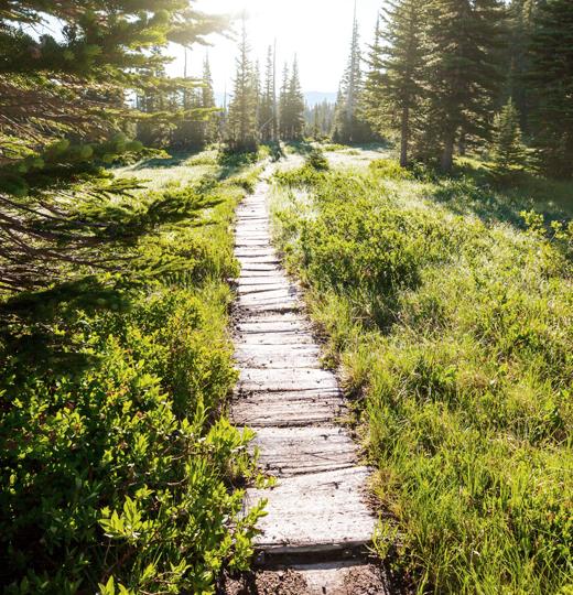 숲길 사진