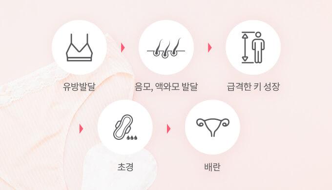 유방발달-음모,액와모발달-급격한키성장-초경-배란